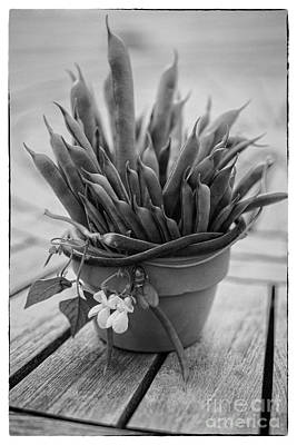 Green Beans Photograph - Fresh Green Beans In Pot by Iris Richardson