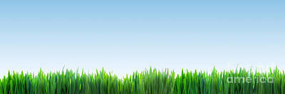 Environment Photograph - Fresh Green Grass Panorama On Clear Blue Sky Background by Michal Bednarek