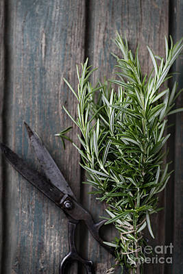 Fresh Herbs Art Print by Mythja  Photography