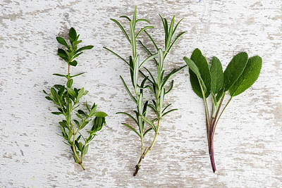 Bound Photograph - Fresh Herbs by Nailia Schwarz