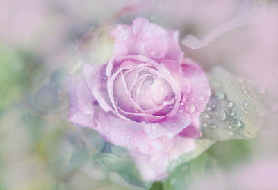 Photograph - Fresh Morning Rose. Floral Abstract by Jenny Rainbow