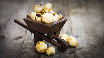 Chemical Glassware - Fresh Muschrooms in a miniature wheelbarrow by Aged Pixel