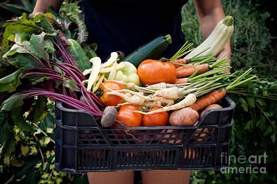 Vegetables Photograph - Fresh Organic Vegetables by Viktor Pravdica