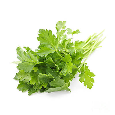 Food And Beverage Photos - Fresh parsley by Elena Elisseeva
