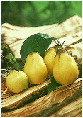 Old Photograph - Fresh Pears  by Lanjee Chee