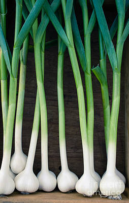Crops Photograph - Fresh Picked Garlic by Edward Fielding