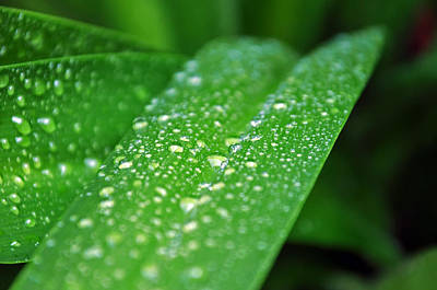 Photograph - Fresh Rain Drops by Jeanne May