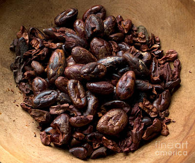 Fresh Roasted Cocoa Beans - Nibs Art Print by Iris Richardson