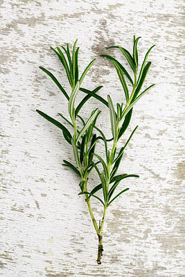 Ingredients Photograph - Fresh Rosemary by Nailia Schwarz