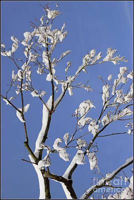 Fresh Snow And Blue Skies Original