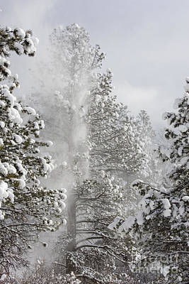 Steve Krull Royalty-Free and Rights-Managed Images - Fresh Snow by Steve Krull
