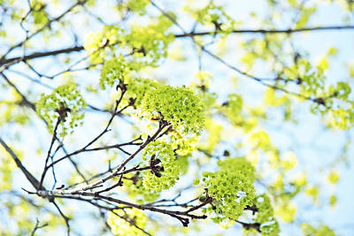 Lime Green Photograph - Fresh Spring Green Buds by Brooke T Ryan