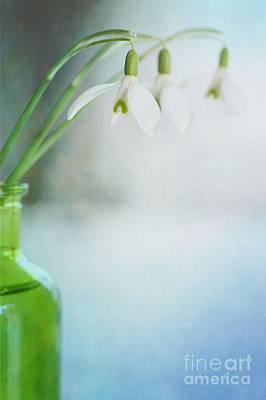 Snowdrops Photograph - Fresh Spring by Priska Wettstein