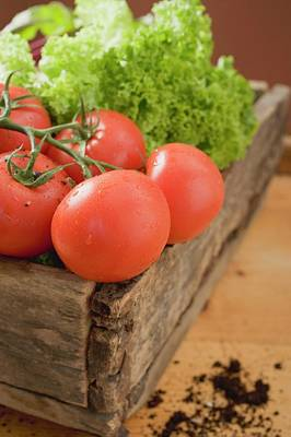 Fresh Tomatoes And Lettuce In Wooden Box Art Print