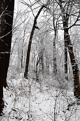Freshly Fallen Snow Art Print