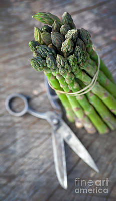 Freshly Harvested Asparagus Print by Mythja  Photography