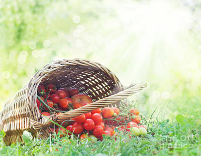 Mythja Photograph - Freshly Harvested Tomatoes by Mythja  Photography