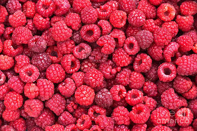 Raspberry Photograph - Freshly Picked by Delphimages Photo Creations