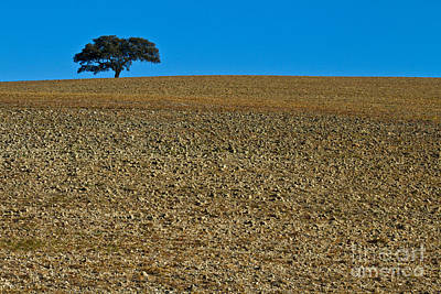 Heiko Koehrerwagner Photograph - Freshly Ploughed Field     by Heiko Koehrer-Wagner