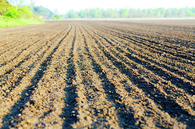 Ploughed Photograph - Freshly Ploughed Field by Wladimir Bulgar