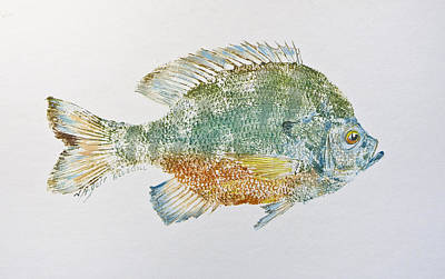 Gyotaku Mixed Media - Freshwater Bluegill by Nancy Gorr