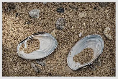 Photograph - Freshwater Clam Shells Michigan by LeeAnn McLaneGoetz McLaneGoetzStudioLLCcom