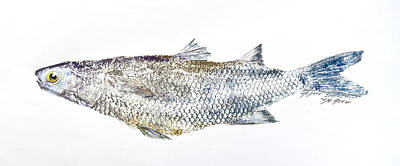 Mixed Media - Freshwater Jumping Mullet by Nancy Gorr