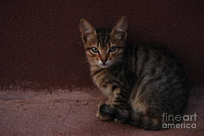 Photograph - Freyja by Erhan OZBIYIK