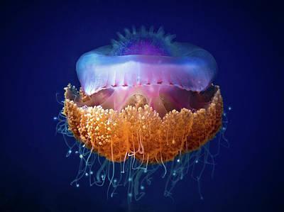 Medusa Photograph - Fried Egg Jellyfish by Luckyguy