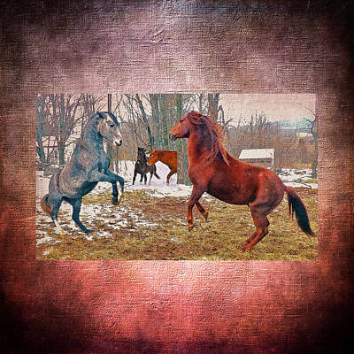 Paso Fino Photograph - Friend Or Foe by Patricia Keller