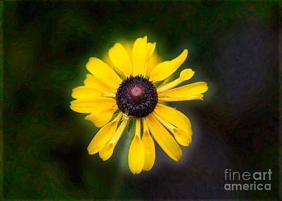 Photograph - Friend With Benefits Yellow Flower Artwork By Omaste Witkowski by Omaste Witkowski