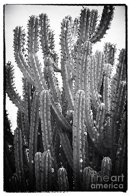 Photograph - Friendly Cacti by John Rizzuto