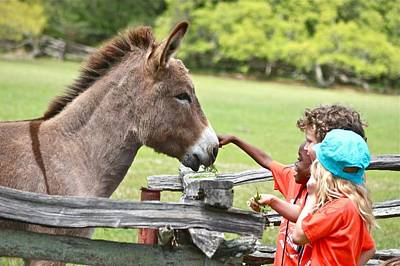Photograph - Friendly Donkey And Children by Jeanne Kay Juhos