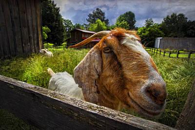 Friendly Goat Art Print