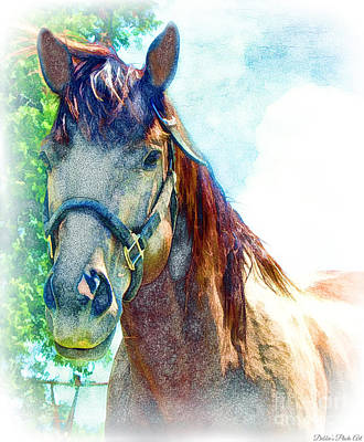 Forelock Photograph - Friendly Horse Digital Effect by Debbie Portwood