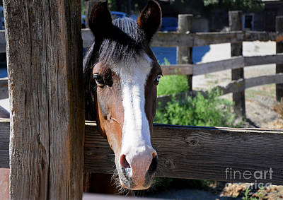 Photograph - Friendly Horse by Susan Wiedmann