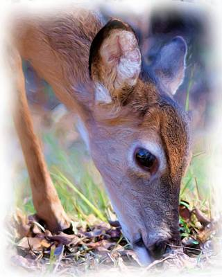 Photograph - Friendly Little Buck by Sheri McLeroy