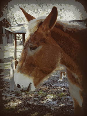 Photograph - Friendly Mule   by Sheri McLeroy