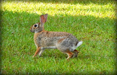 Friendly Rabbit I Art Print by Lynn Griffin