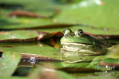 Friendly Roseland Lake Frog  Art Print by Neal Eslinger