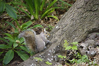 Art Print featuring the photograph Friendly Squirrel by Marilyn Wilson