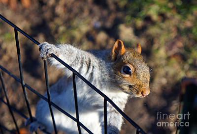 Friendly Squirrel Art Print