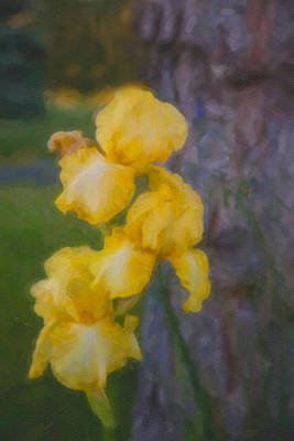 Fauvism Mixed Media - Friendly Yellow Irises by Omaste Witkowski