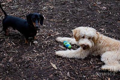 Photograph - Friends 3 by Sandra Clark