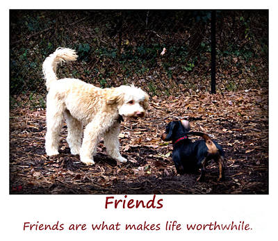 Photograph - Friends Are Wothwhile by Sandra Clark