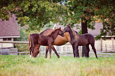 Equine Photograph - Friends by Donna Doherty