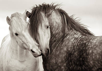 Wall Art - Photograph - Friends IIi by Tim Booth