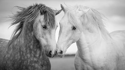 Black Horse Photograph - Friends Iv by Tim Booth