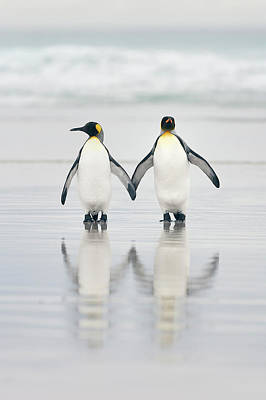 Shore Birds Photograph - Friends by Joan Gil Raga