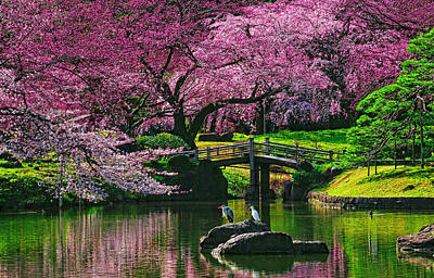 Spring Pond Photograph - Friends by Midori Chan